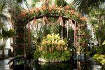 OrchidShowMediaDay073