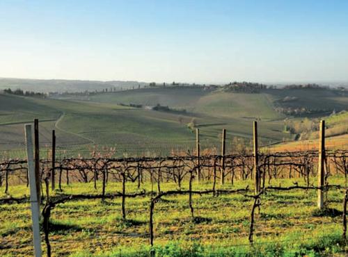 Michelin Wine Trails Italy - Imola