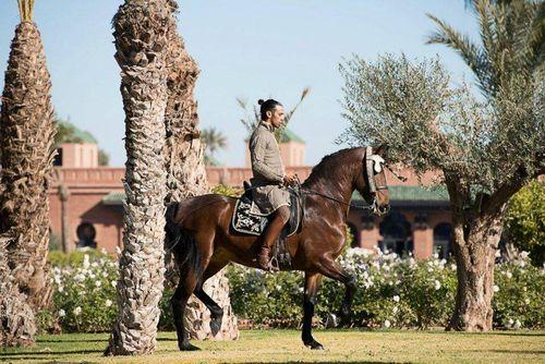Selman Arabian Horse