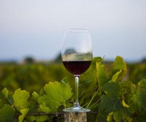 Maggiovini wine glass