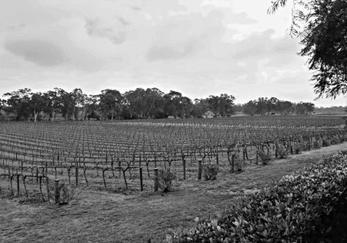 Hewitson Vineyard