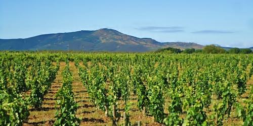 Erasmo vineyards 3 copy