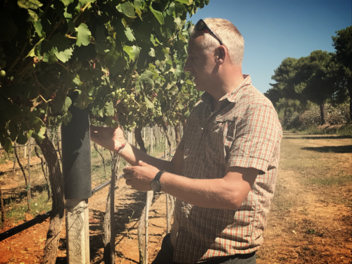 Sella Mosca Vineyard Agronomist