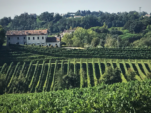 Masottina Vineyards