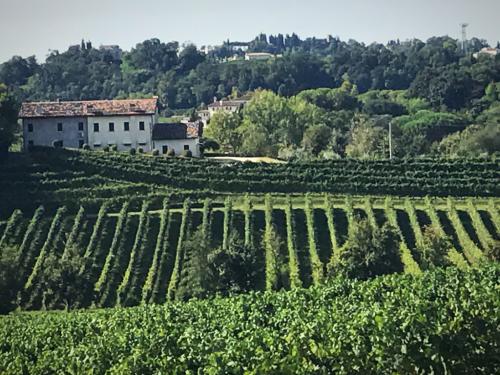 Masottina Vineyards