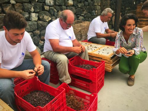 Donnafugata Zibibbo destemming Pantelleria