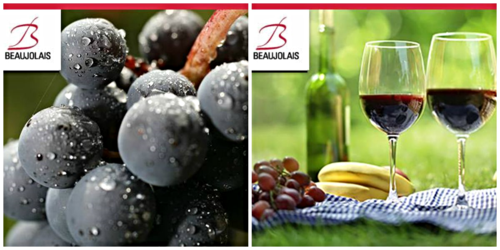 Beaujolais stock photos collage
