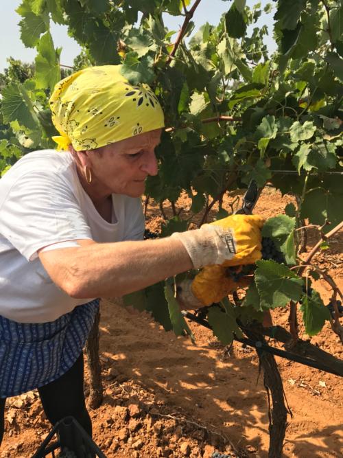 Women's Harvest Tenute Rubino