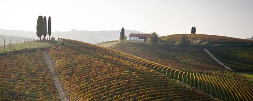 Michele Chiarlo vineyards