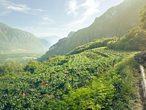 10_Ferrari vineyards
