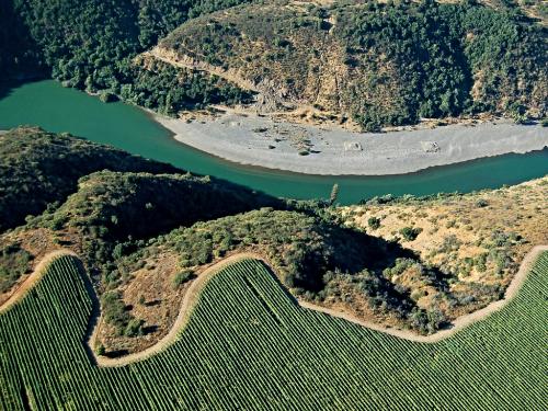 Viñedo-Ucuquer-Valle-de-Rapel-1024x767