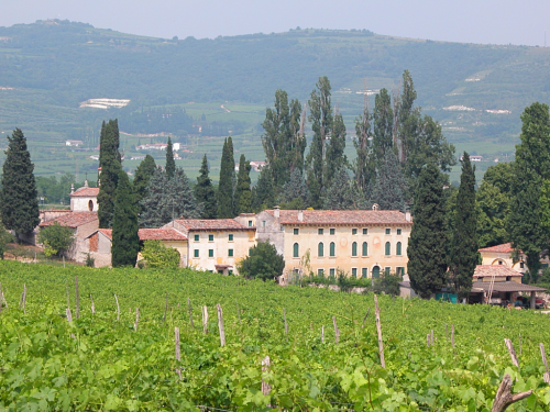 Sartori-Vineyards-and-House