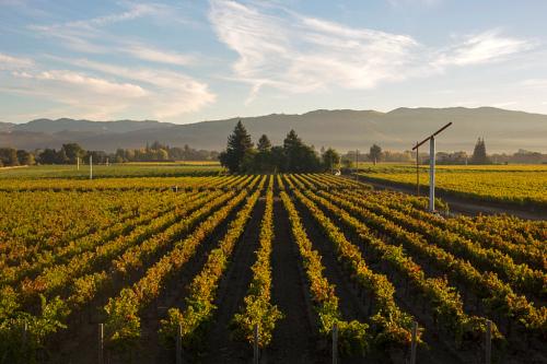 Beaulieu Vineyard Landscape