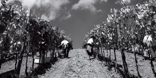 Nardi Harvest